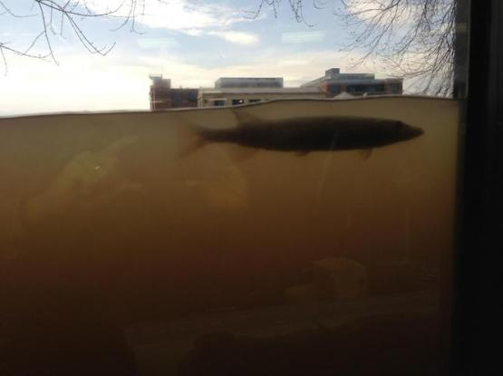 A fish swims by the street-level window of an eyecare office in downtown Grand Rapids. (MLive.com)