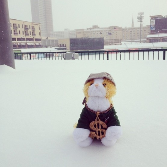 DJ TinCat, awoken from his winter hibernation, enjoys the Parkview Field snow.